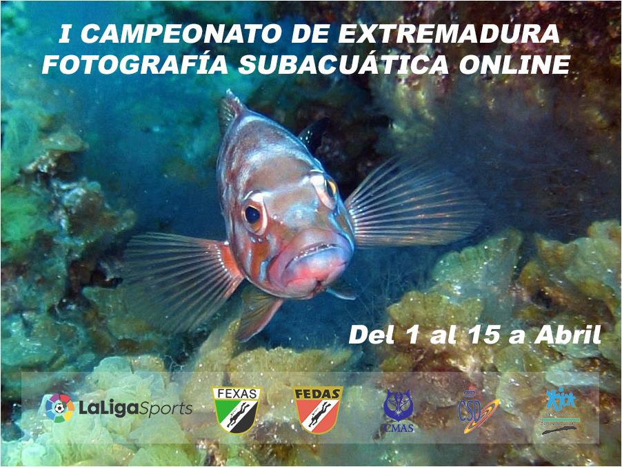 I Campeonato Fotografía Subacuática